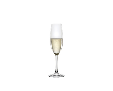 SPIEGELAU Winelovers Champagne Flute filled with a drink on a white background