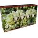 Sample packaging of the RIEDEL Vinum Riesling Set 4-pack