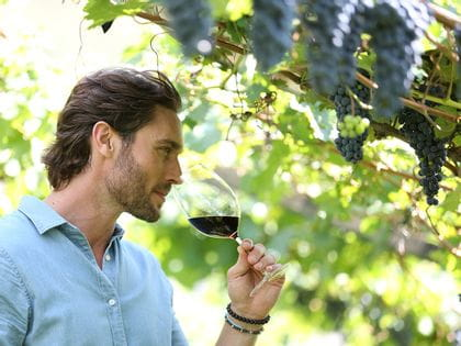 Man in a vineyard smells wine
